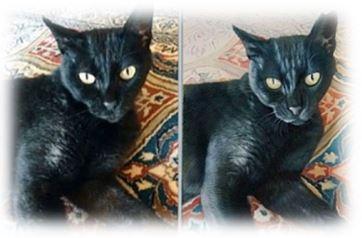 Tierportrait Reproduktion Katze